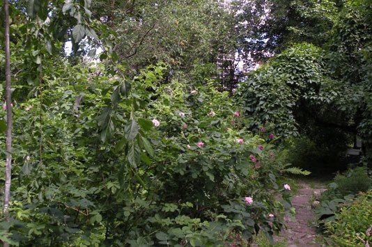 Сад прекрасен в любое время года