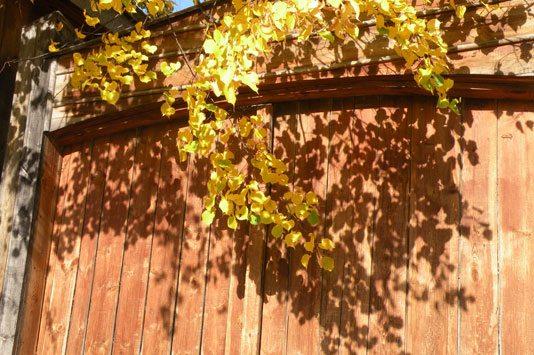 А осень дарит свои неповторимые краски