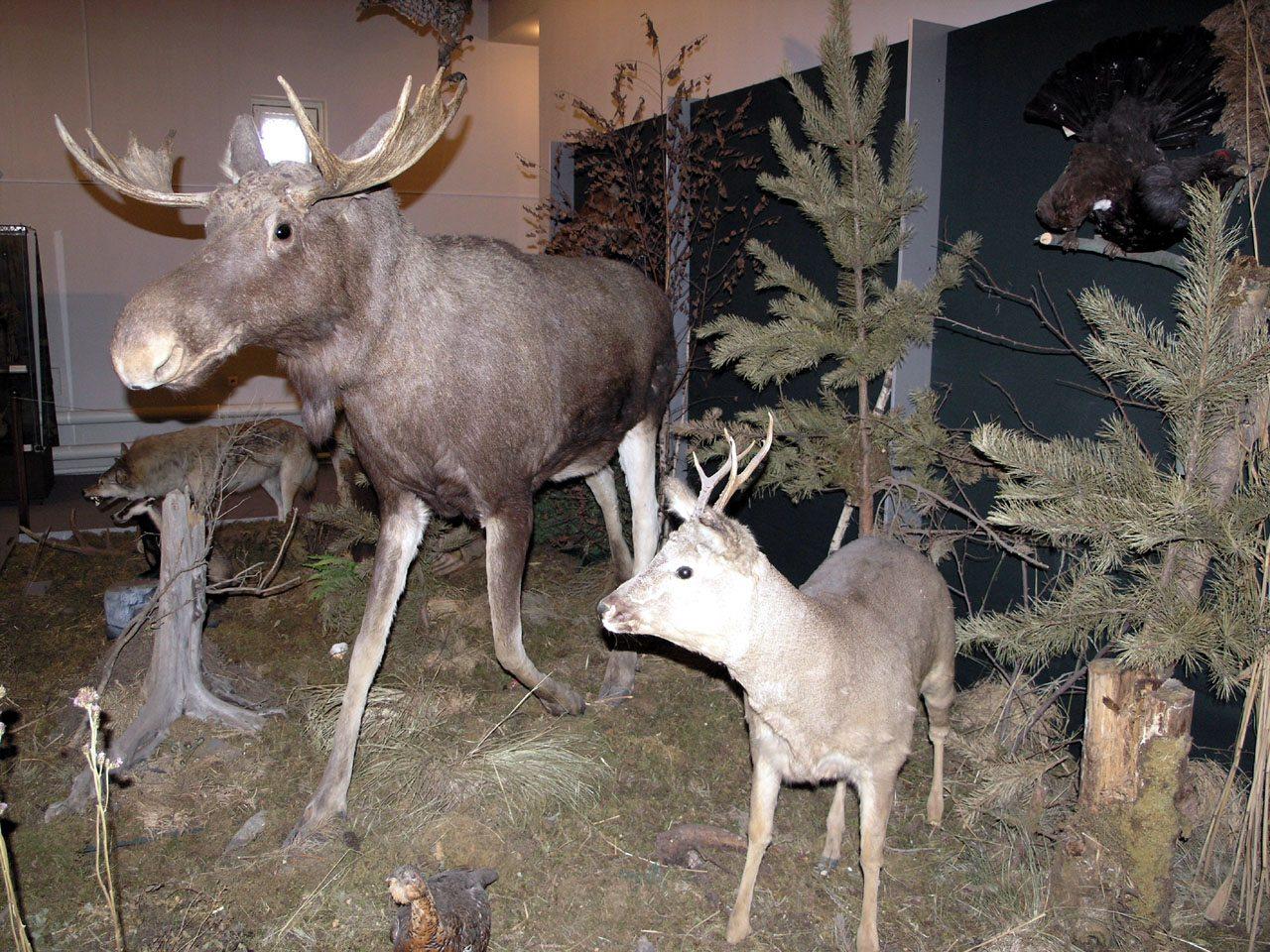 Музей природы и охраны окружающей среды Нижнего Тагила