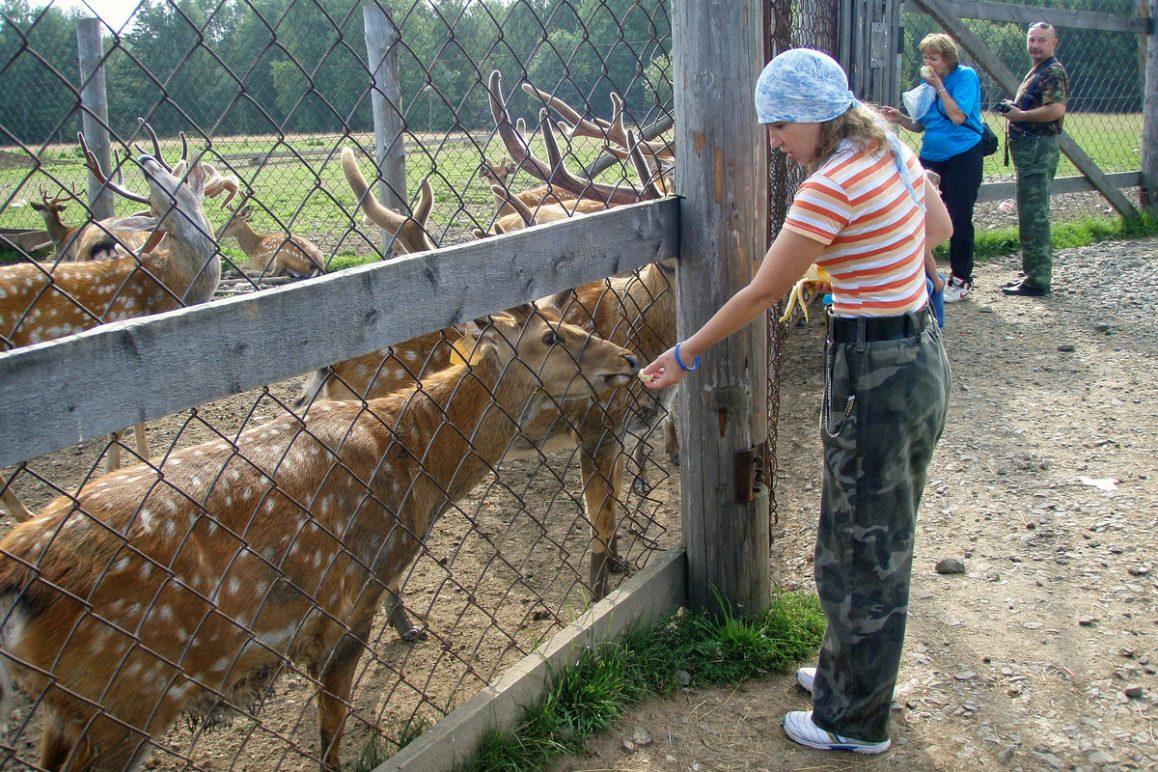 Висим, Оленья ферма, Свердловская область
