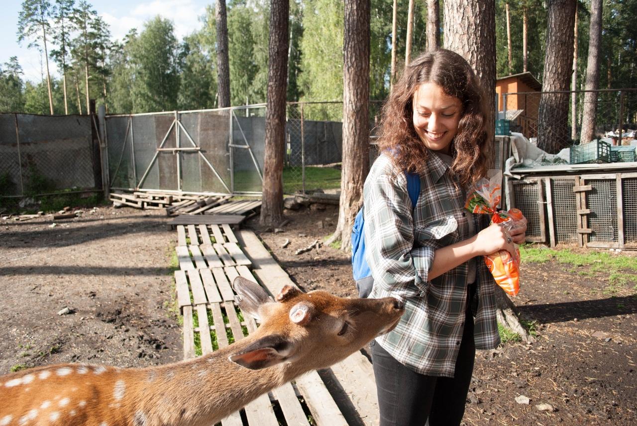 Оленья ферма, озеро Иткуль, Свердловская область, Челябинская область, отдых с детьми, интересные места Свердловской области