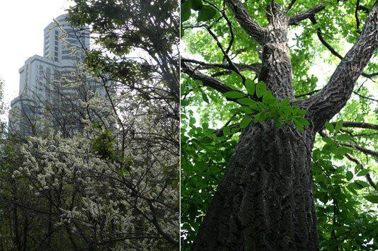Сад Ястребова