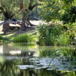 Река Ассель, Ассель, Асель