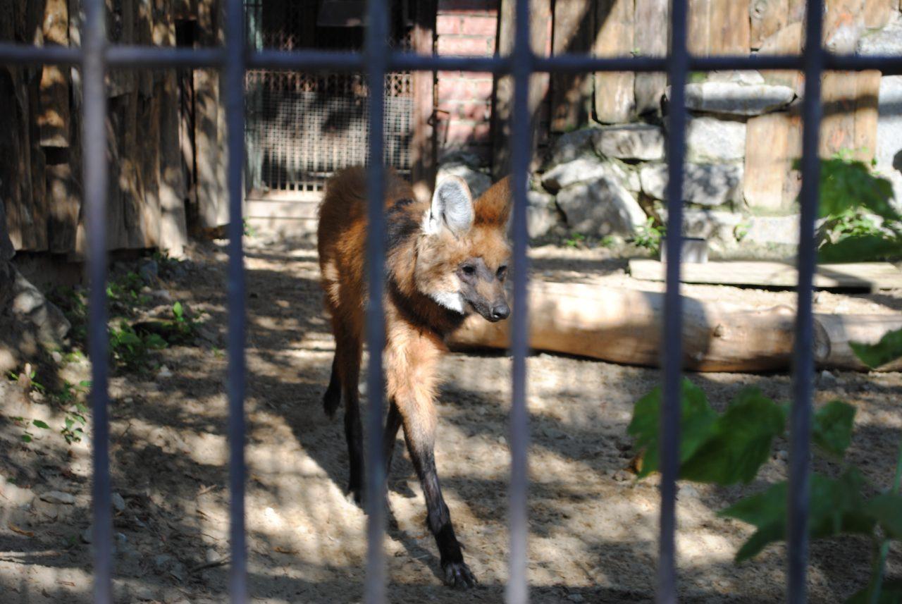 Свердловская область, Екатеринбург, зоопарк, экзотеррариум, Красная Книга, редкие животные