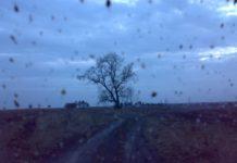 Озеринки, деревца...