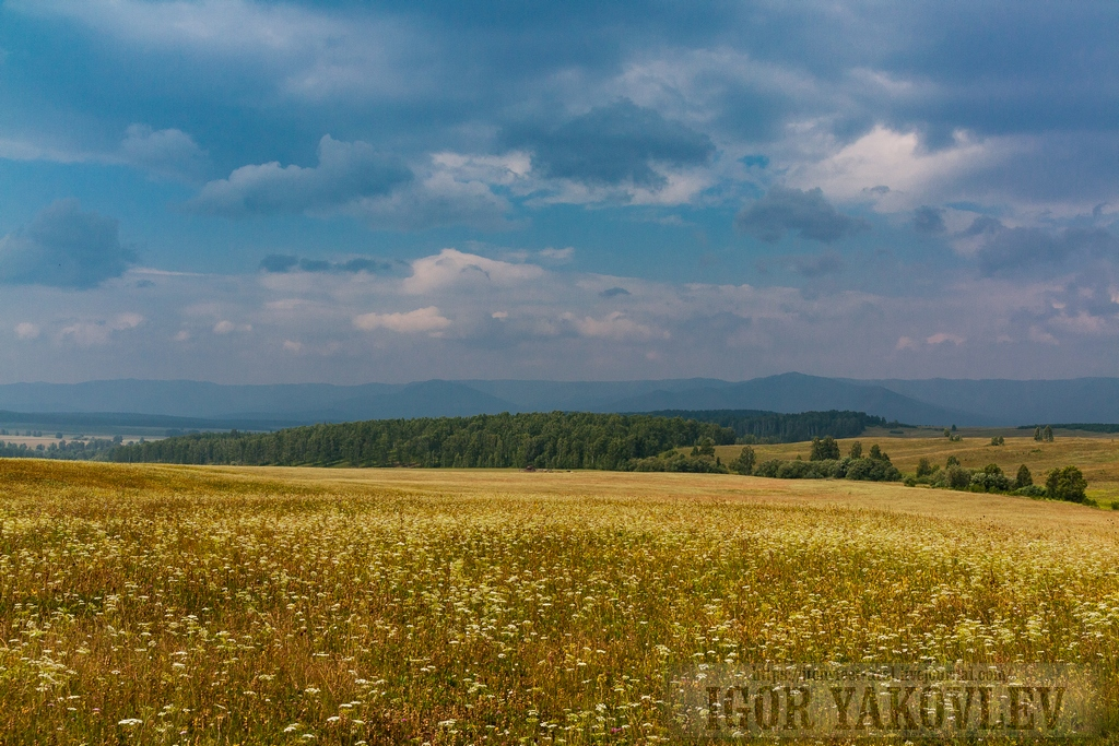 башкирское редколесье фото описывать тиамат