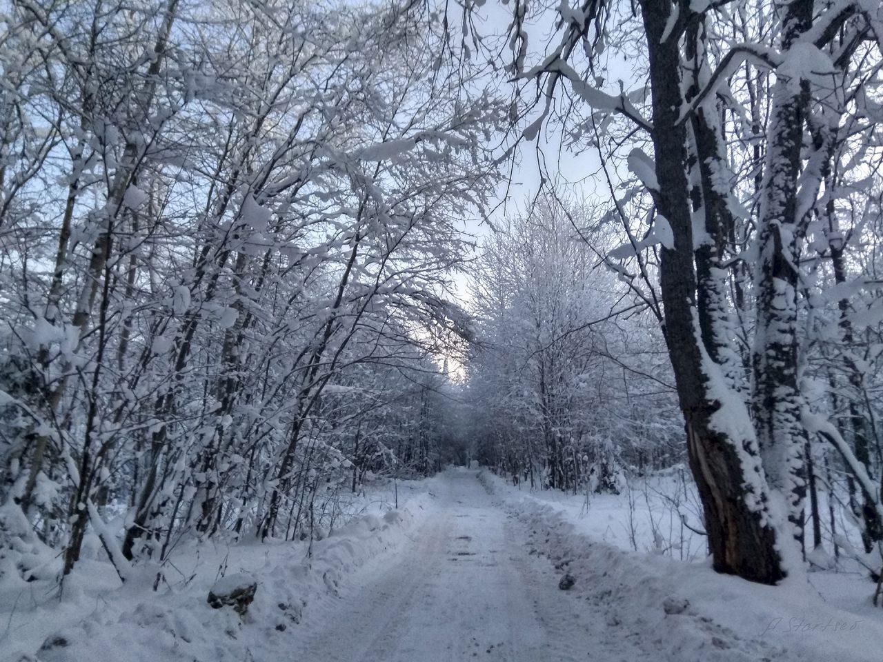 Лесовозная дорога, участок бывший Кусьинского тракта