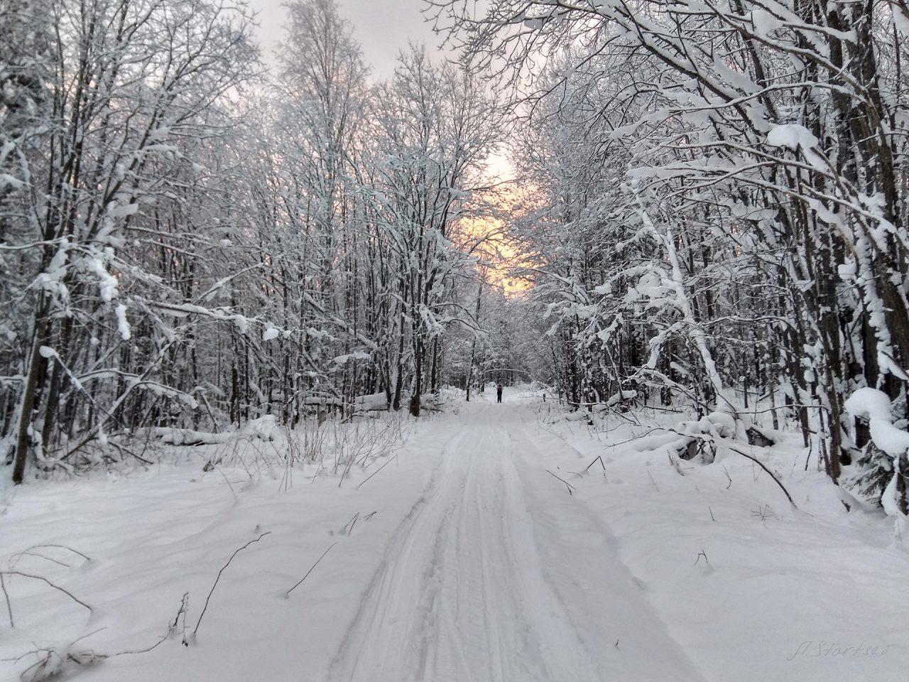 Лесовозная дорога на закате, участок бывший Кусьинского тракта
