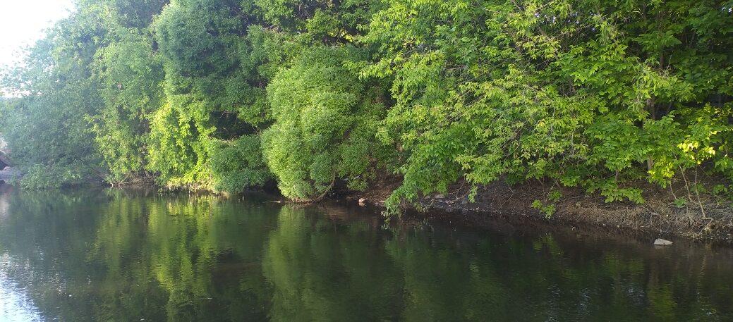 Удивительный животный и растительный мир Бузулукского бора, фото, как добраться