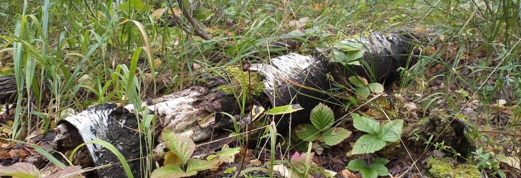 История крепостного лесовода
