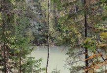 Новый маршрут в парке «Оленьи ручьи»: Демидовская тропа
