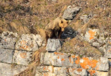 Национальный парк Башкирия, Театр медведей