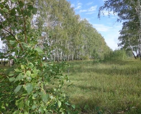 Голубовские лесные колки