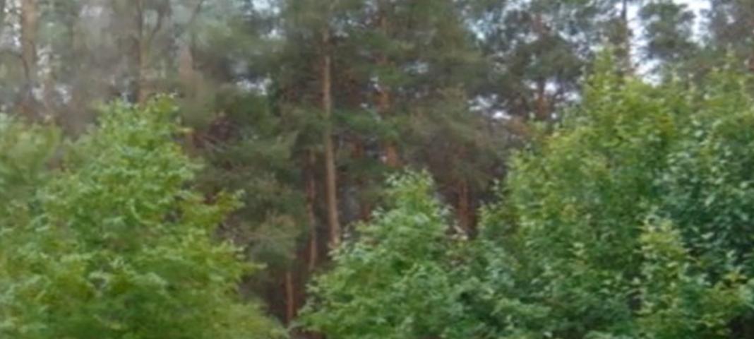 Сорочинск. Чудеса Гамалеевского леса