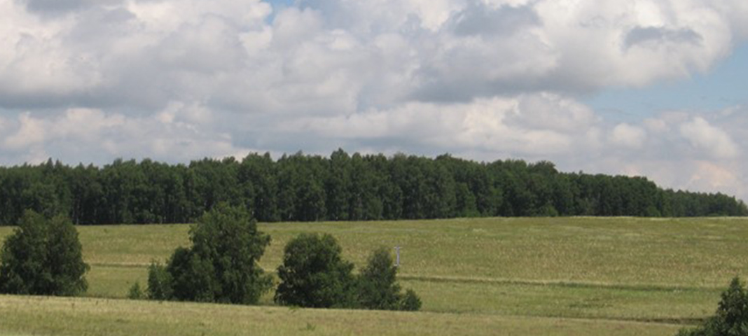 Путешествие по родному краю IV — Голубовские лесные колки