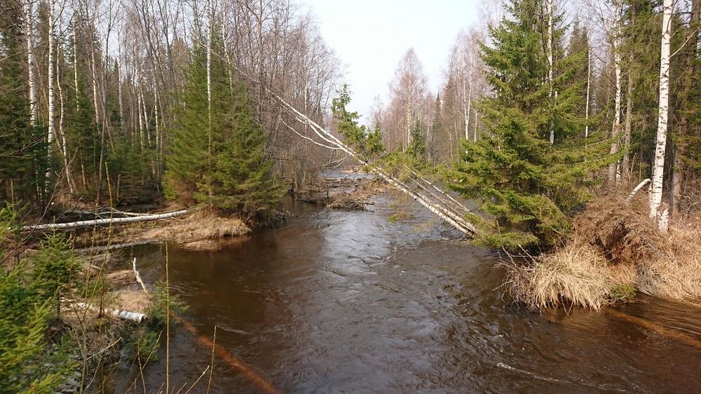 Рукав реки Каквы