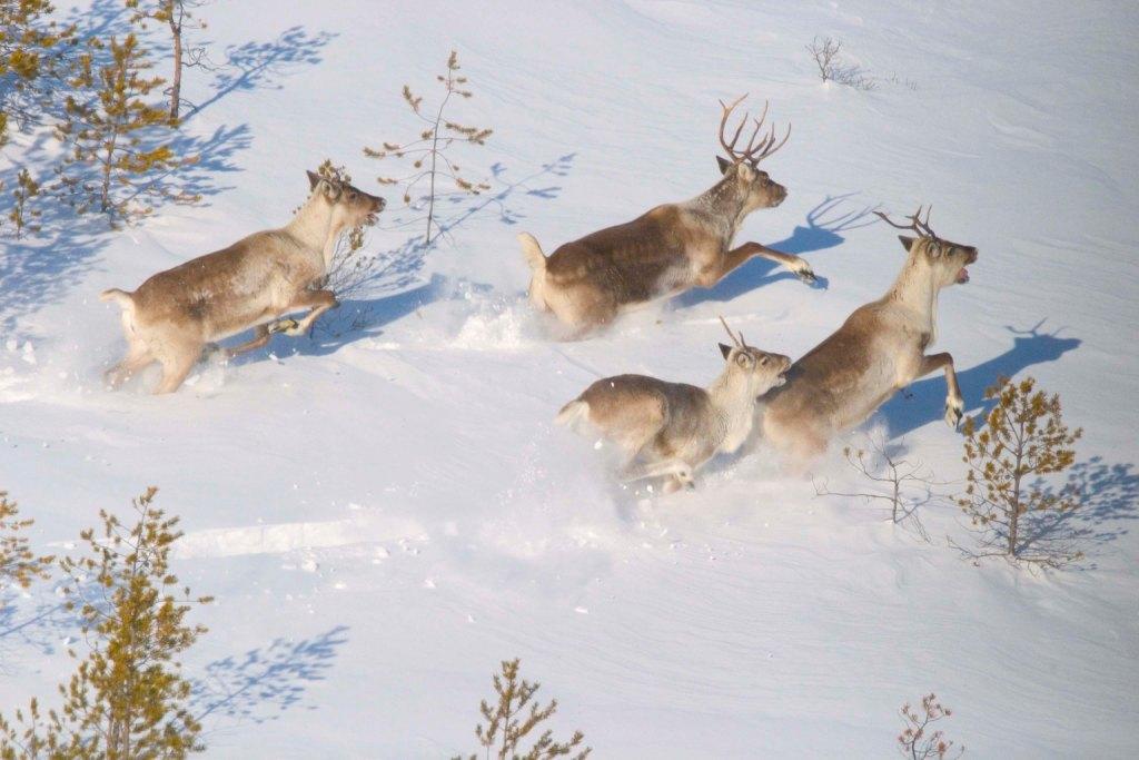 ХМАО, Ханты-МАнсийский АО, заповедные зоны Урала, уральская природа, заповедник Малая Сосьва, флора и фауна урала