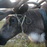 Арктика, история Урала, северные олени, наука