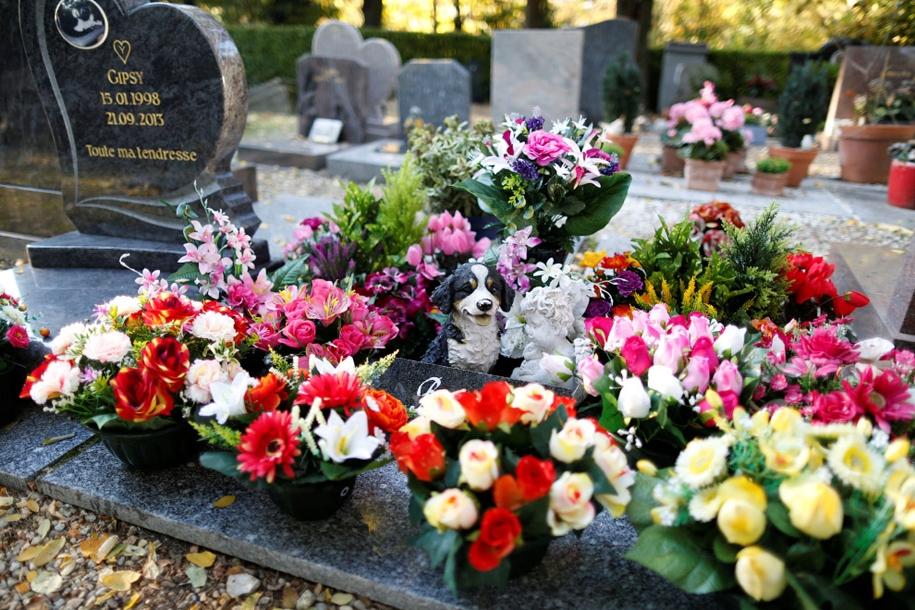 Кладбище домашних животных, интересное на Урале, Екатеринбург, Свердловская область, необычные места Екатеринбург, кладбища для животных в мире
