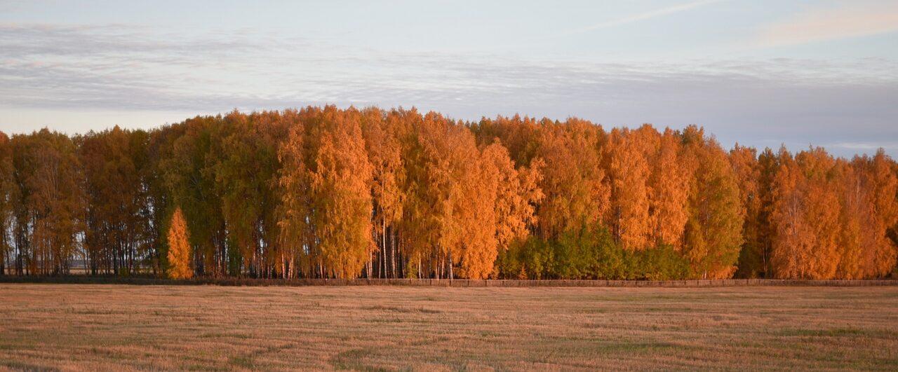 Казанка: люди, история, наше время: часть 1