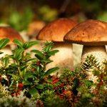Где собирать грибы в Тюменской области?