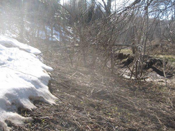 По подтопленому снегу виден уровень воды, который тут был
