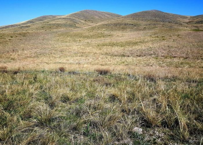 Айтуарская степь, Оренбургская область