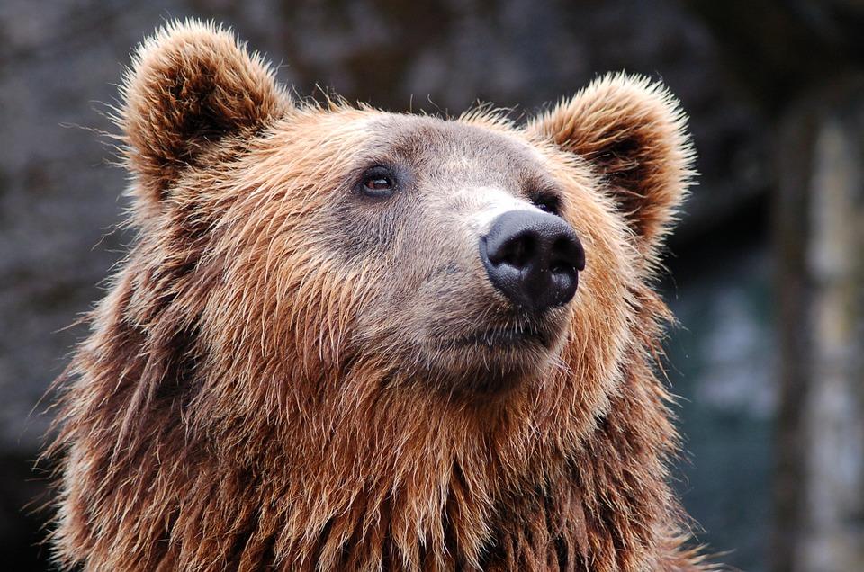 Институт экологии растений и животных Уро Ран, пещерный медведь, спелеология, археологическая на хождка, Свердловская область