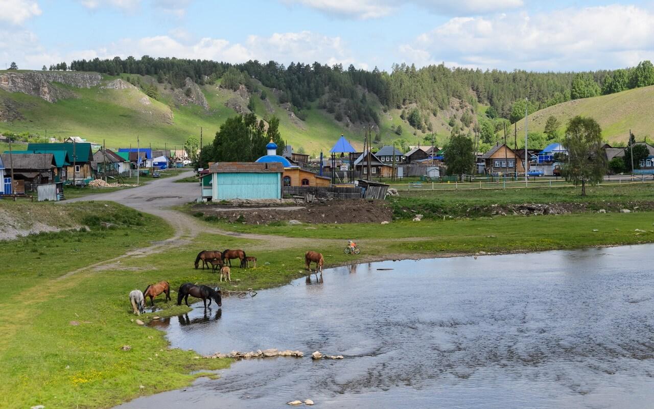 Село Орловка, табун сам пришёл на водопой - там все ходят сами по себе