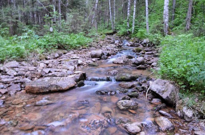 Лесной ручей в сумерках
