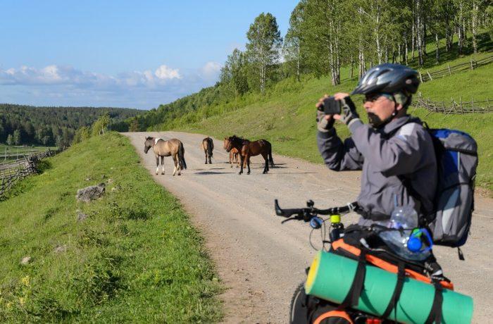 Евгений и лошади