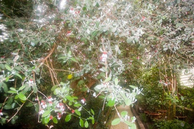 botanicheskiy-sad-ufa16