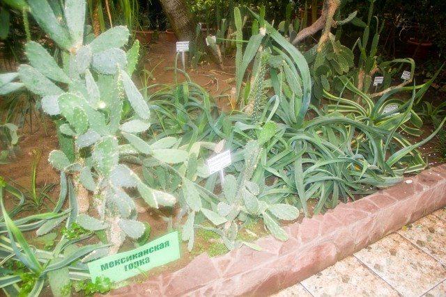 botanicheskiy-sad-ufa19