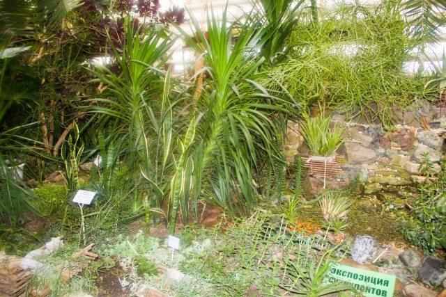 botanicheskiy-sad-ufa20