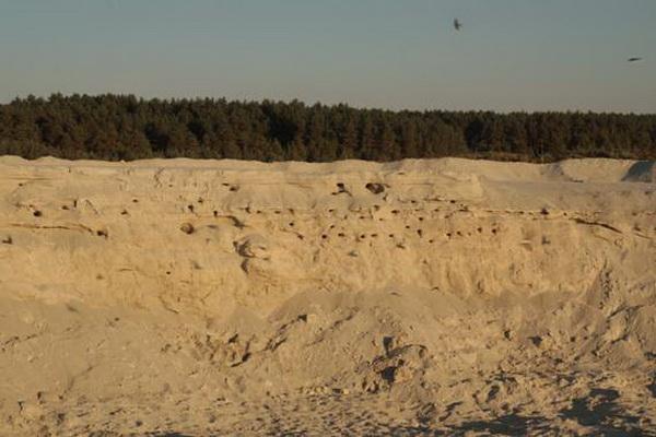 Березовская пустыня