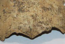 В пещере Шульган-Таш нашли череп ребенка — ученые уже его изучают