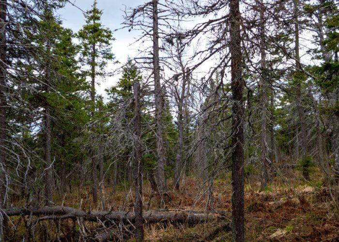 Лес Бабы Яги
