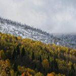 Искушта Хаятт: крутая лаундж-зона, виды на горы и коровы за забором
