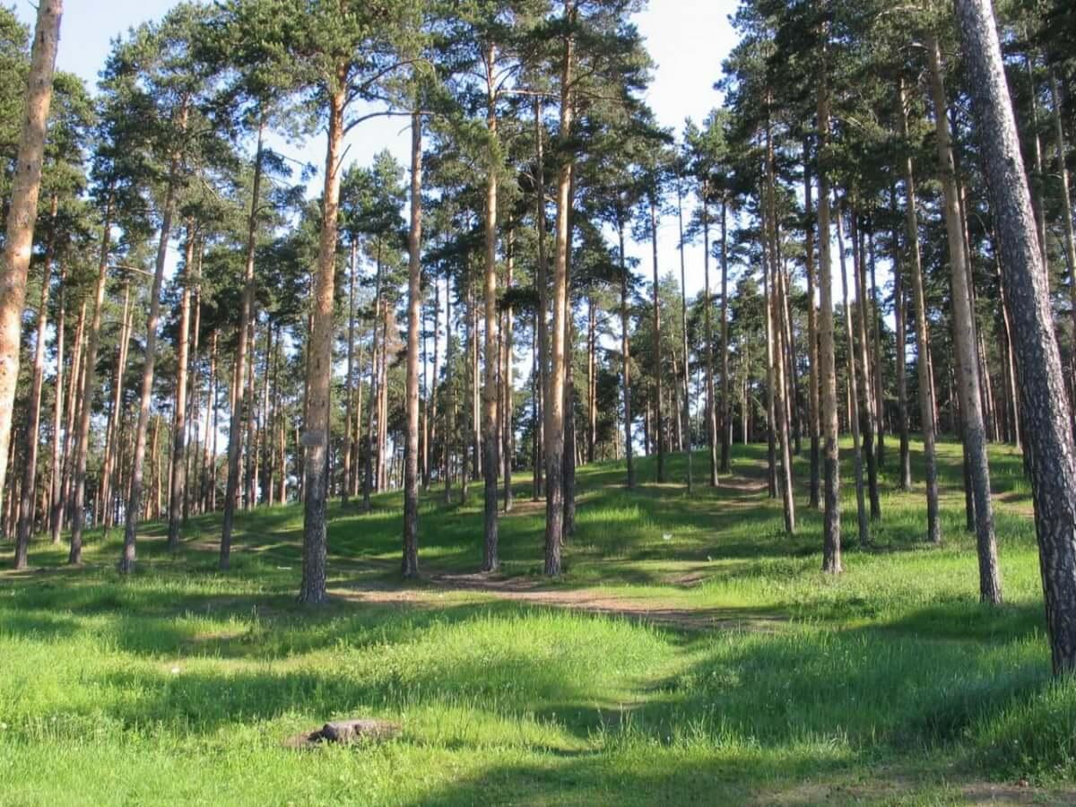 Калиновский лесопарк, Екатеринбург
