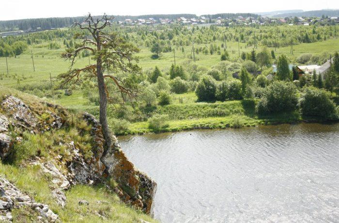 деревья выживают как могут в суровых условиях