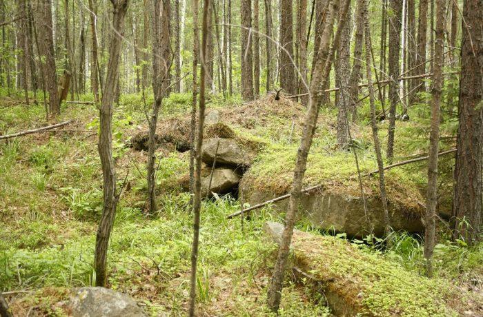 В начале подъем не очень значительный и идет по лесу, где повсеместно встречаются выходы горных пород, покрытых мхом...