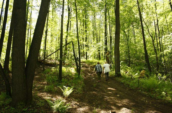 Путь не легок. Затяжной подъем по лесу...