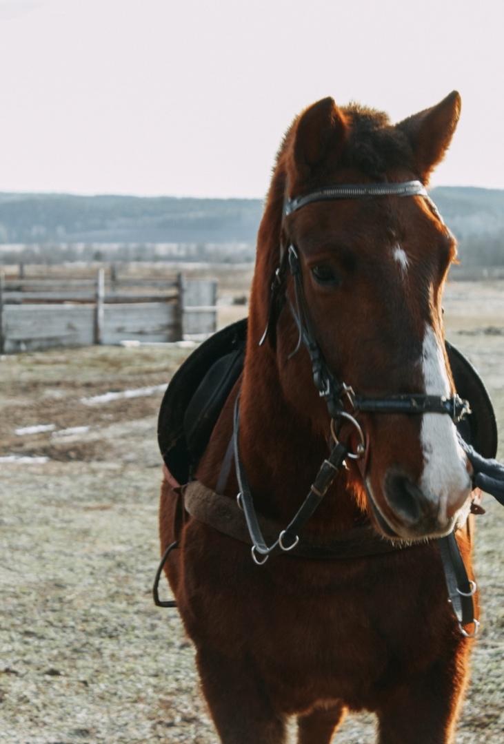 Конно-спортивный клуб Маркиз, малые города, Пермский край, Березовка, конный клуб, развлечения на Урале, конные прогулки, конные походы,