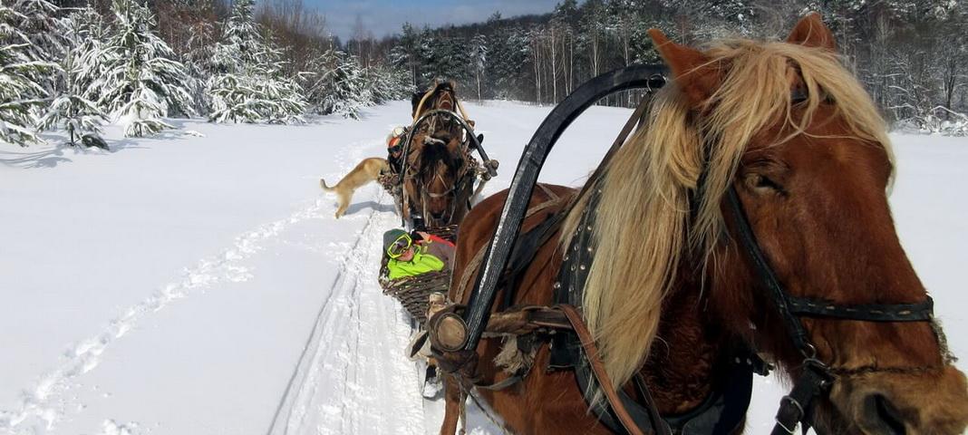 Единственные в России конно-санные маршруты