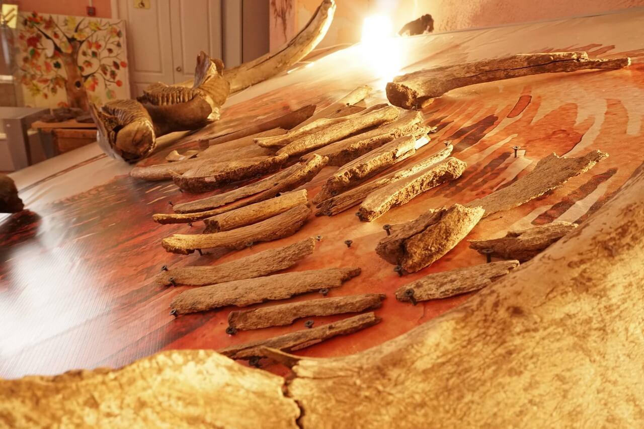 Кости мамонта, Краеведческий музей, Краснокамск, Пермский край