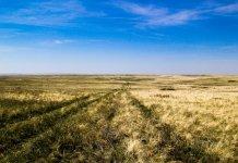 Оренбургская степь