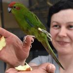 Мария Рудакова: Избушка под Ирбитом стала роддомом для попугаев