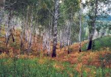 Тюменская область, село Исетское, малые города, маршруты по Уралу, маршрут выходного дня, краеведческий музей села Исетского