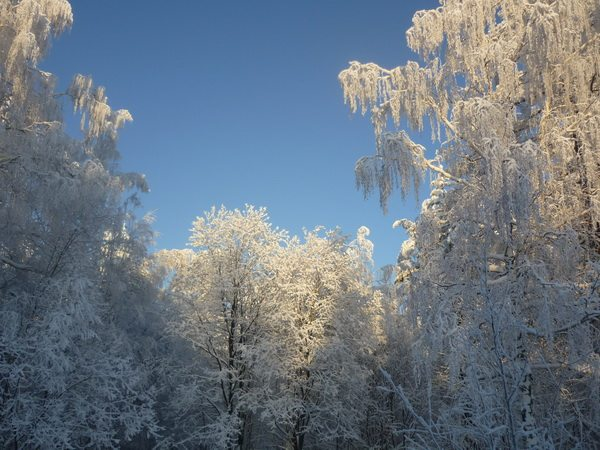 Сказочный лес по дороге в Нязепетровск