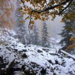 Осень на Зубчатках